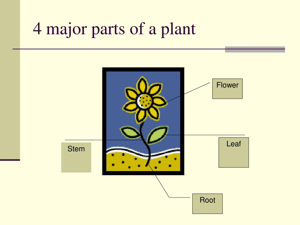 4 major parts of a plant
