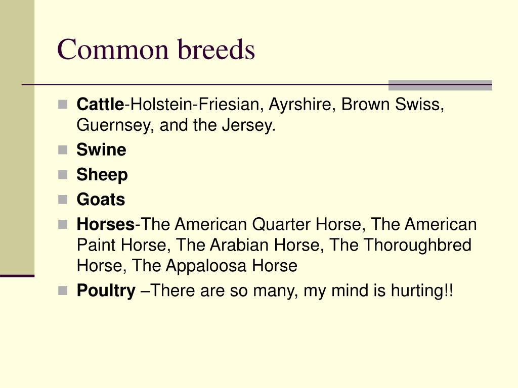 Common breeds