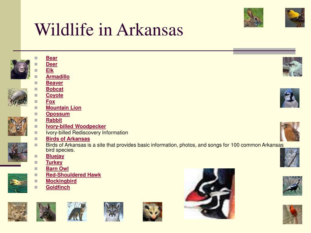 Wildlife in Arkansas