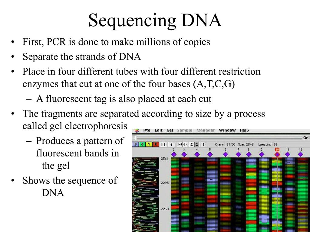 Sequencing DNA
