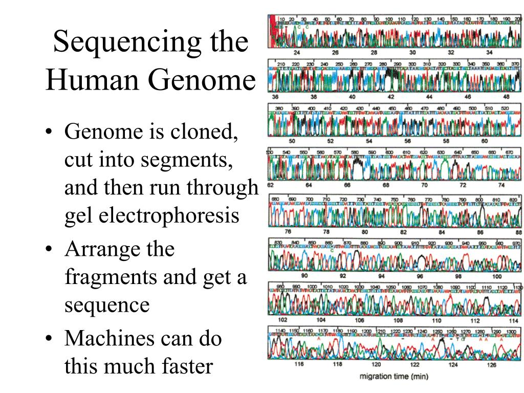 Sequencing the Human Genome