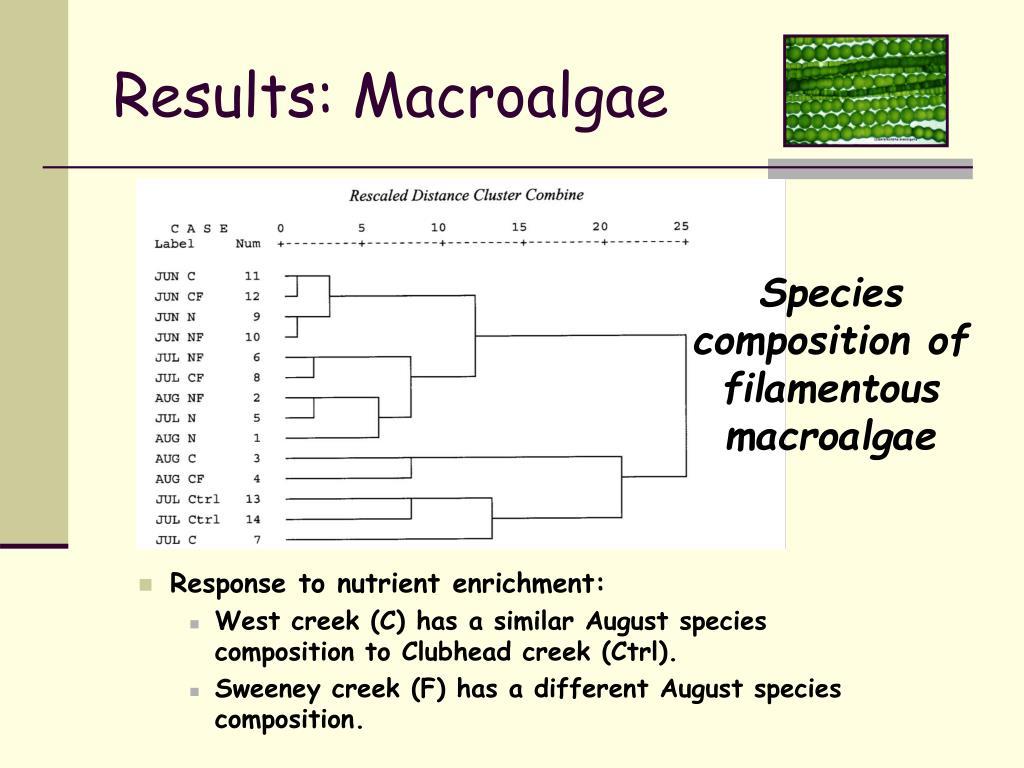 Results: Macroalgae