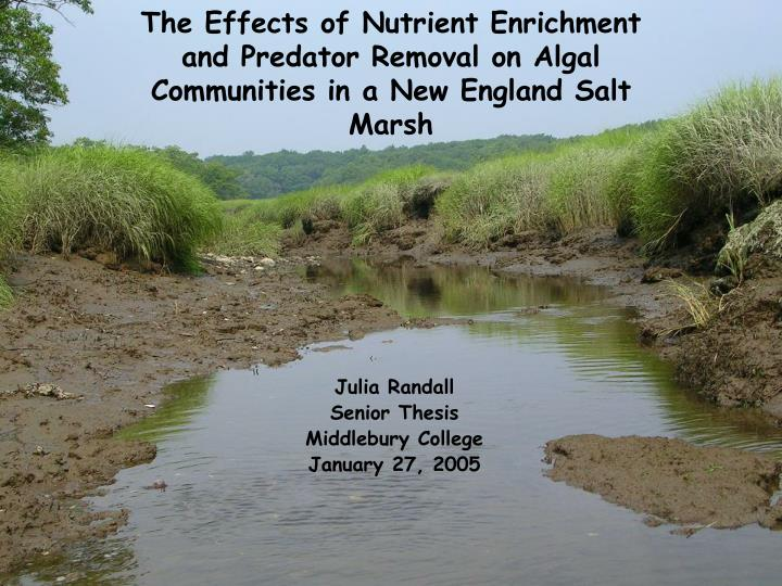 The Effects of Nutrient Enrichment and Predator Removal on Algal Communities in a New England Salt M...