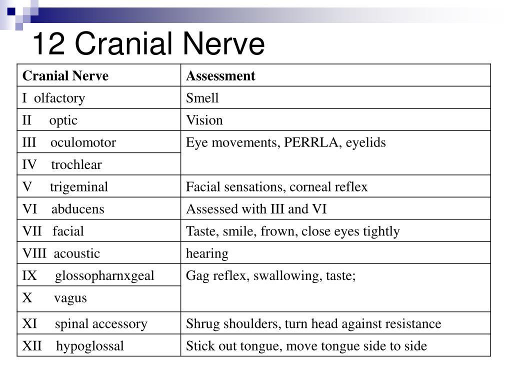 12 Cranial Nerve