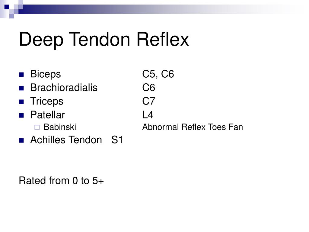 Deep Tendon Reflex