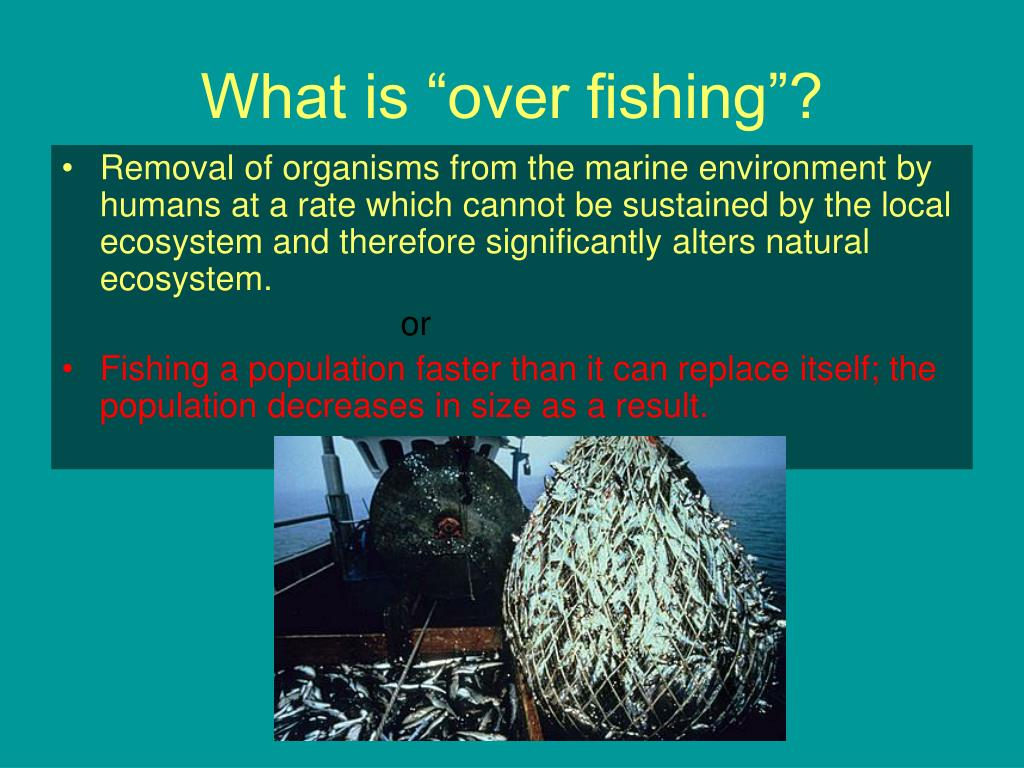 "What is ""over fishing""?"