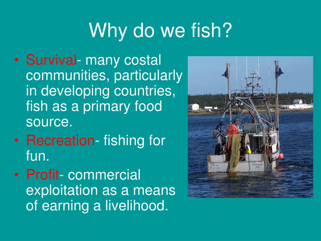 Why do we fish?