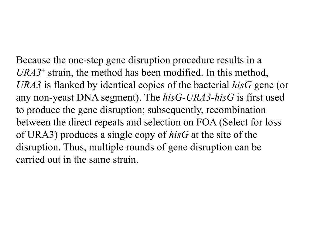 Because the one-step gene disruption procedure results in a