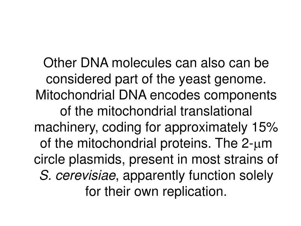 Other DNA molecules can also can be considered part of the yeast genome. Mitochondrial DNA encodes components of the mitochondrial translational machinery, coding for approximately 15% of the mitochondrial proteins. The 2-