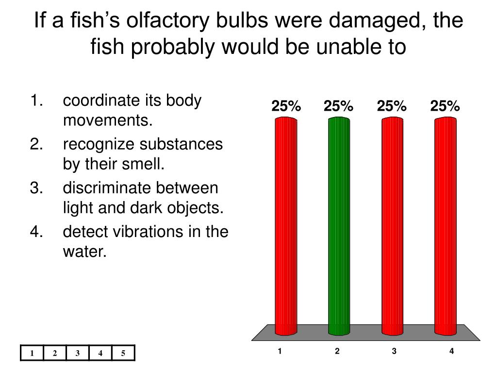 If a fish's olfactory bulbs were damaged, the fish probably would be unable to