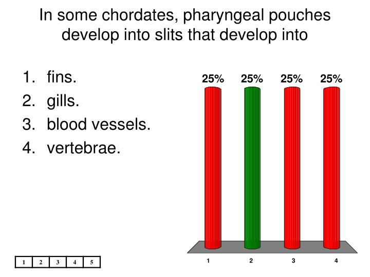 In some chordates pharyngeal pouches develop into slits that develop into l.jpg