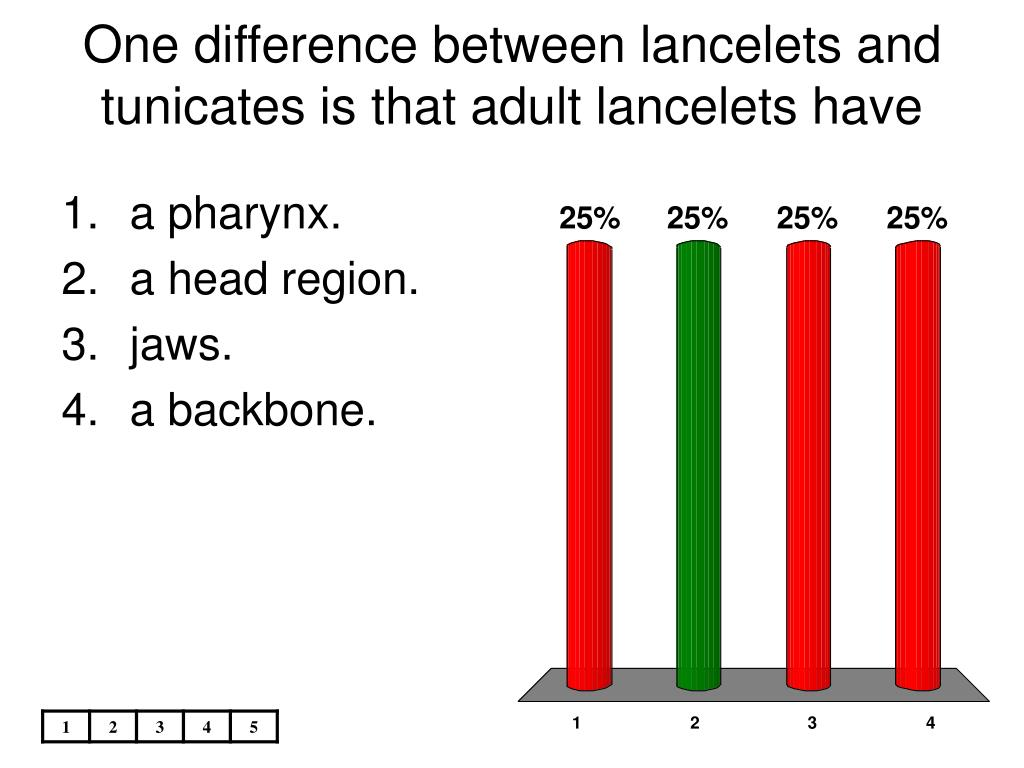 One difference between lancelets and tunicates is that adult lancelets have