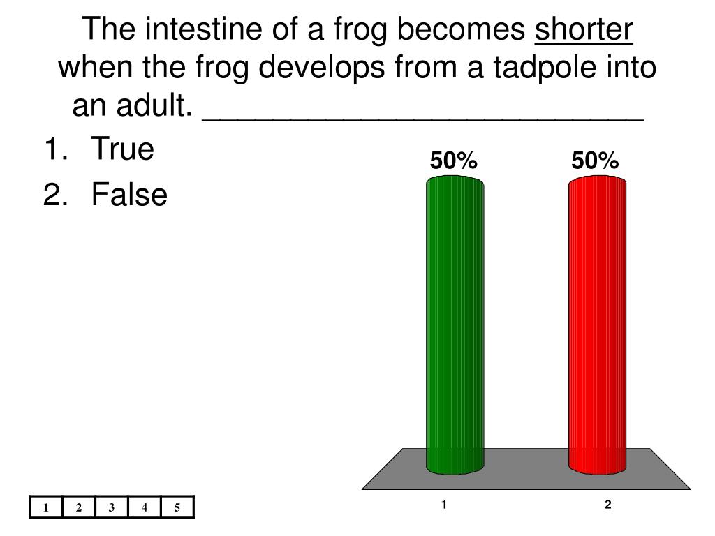 The intestine of a frog becomes