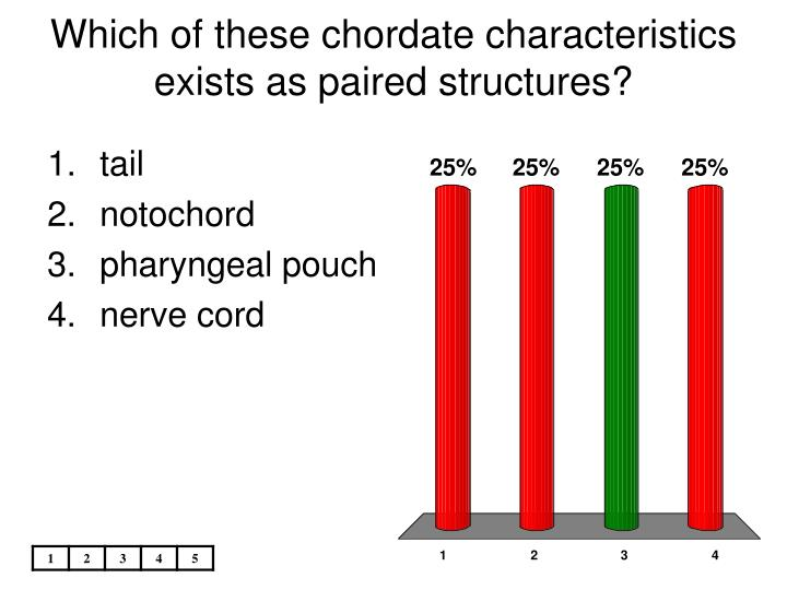Which of these chordate characteristics exists as paired structures l.jpg