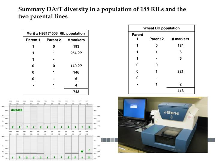Summary DArT diversity in a population of 188 RILs and the two parental lines