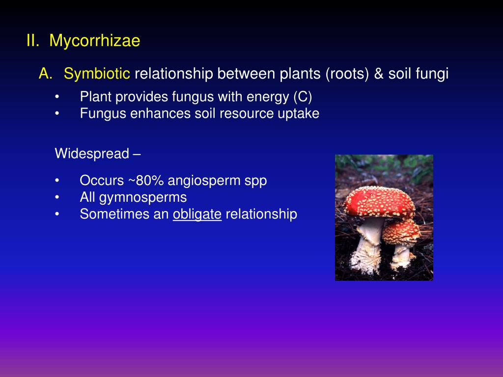II.  Mycorrhizae
