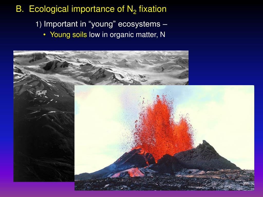 B.  Ecological importance of N