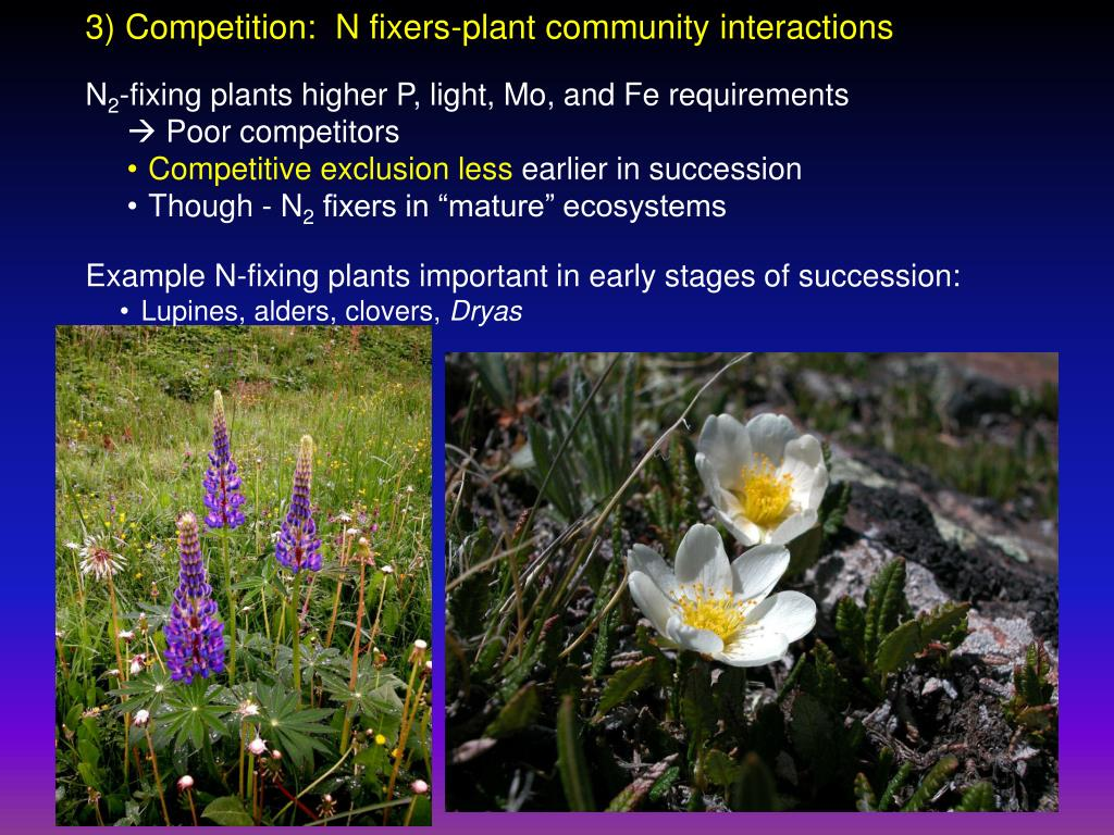 3) Competition:  N fixers-plant community interactions