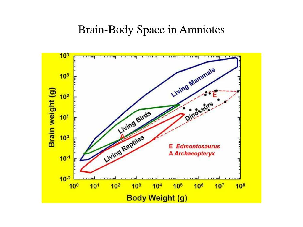 Brain-Body Space in Amniotes