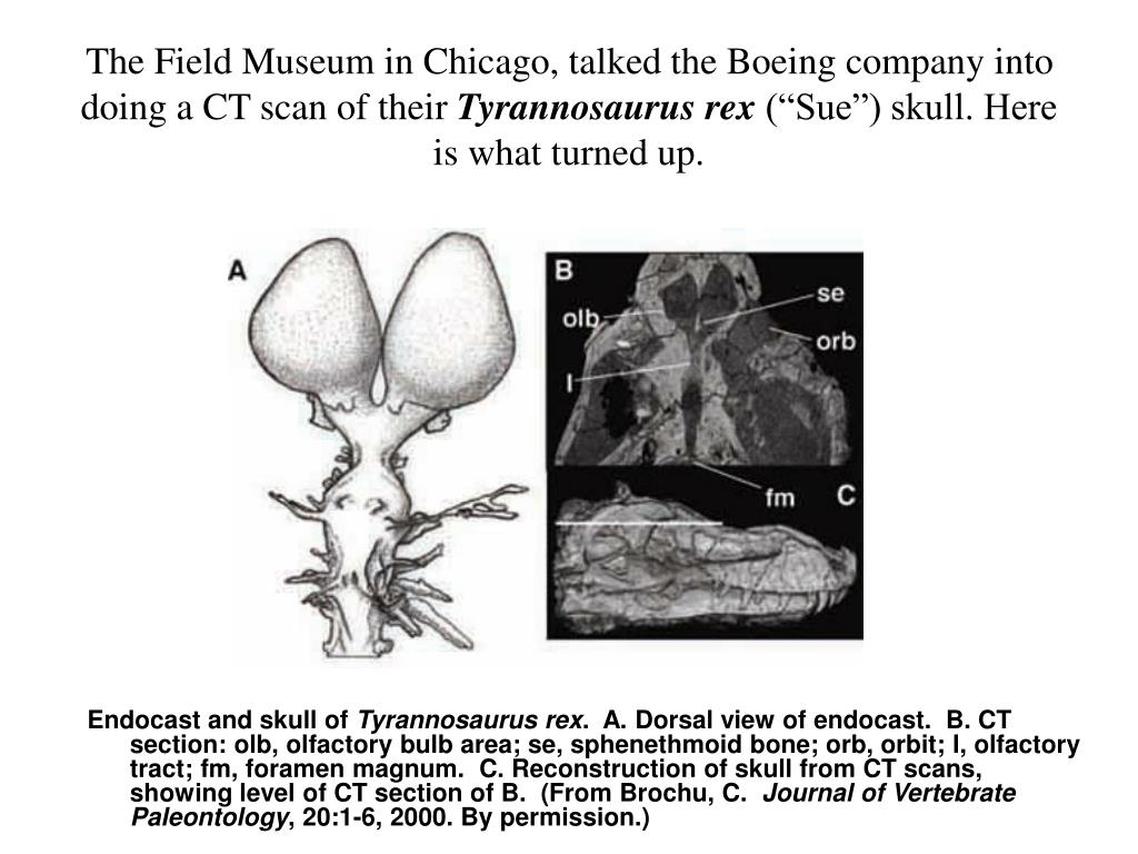 The Field Museum in Chicago, talked the Boeing company into doing a CT scan of their