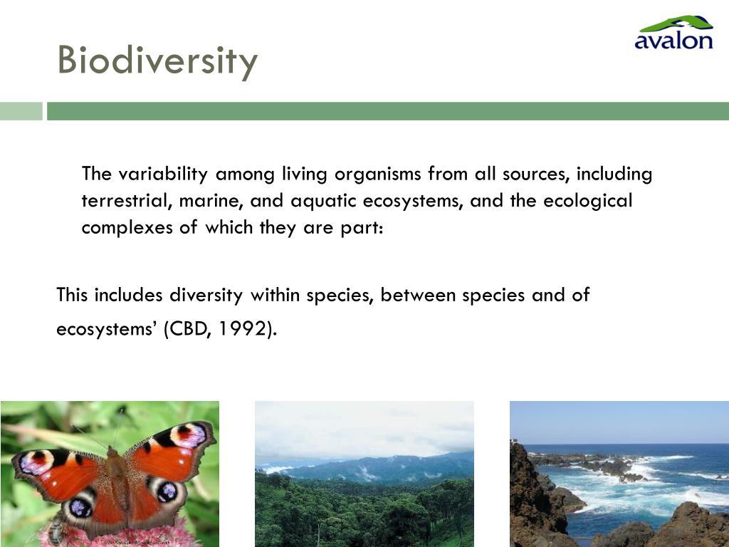 Biodiversity strategy cbd
