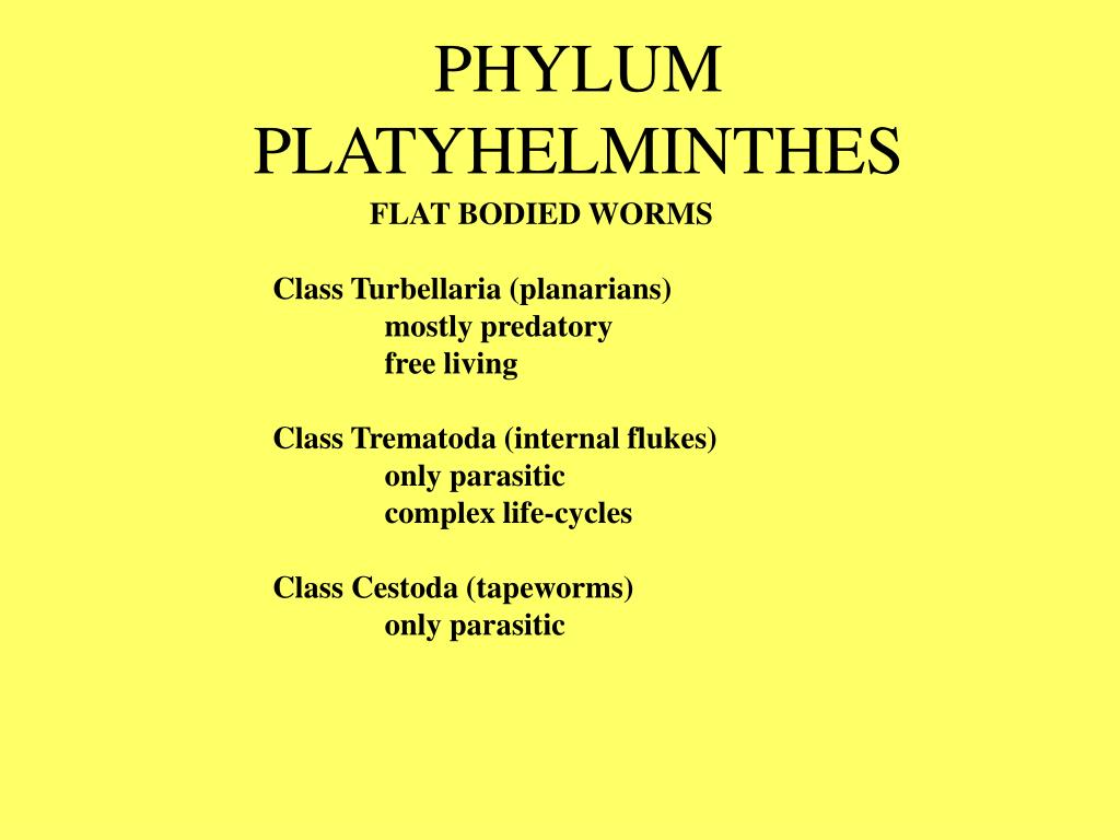 PPT - PHYLUM PLATYHELMINTHES PowerPoint Presentation - ID ...