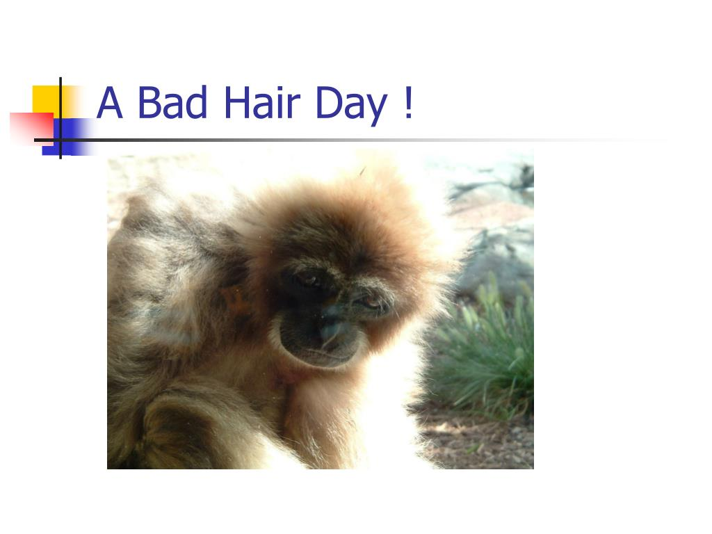 A Bad Hair Day !
