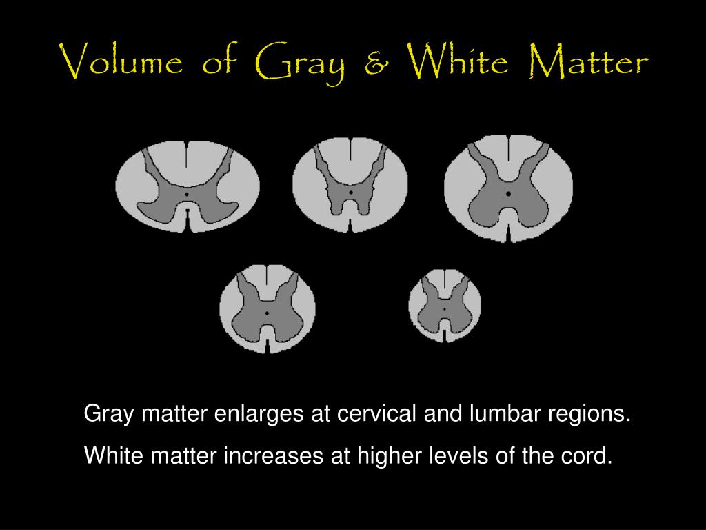Volume  of  Gray  &  White  Matter