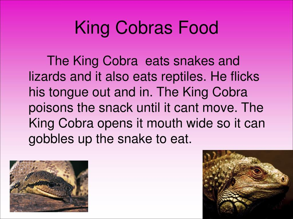 King Cobras Food