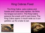 king cobras food
