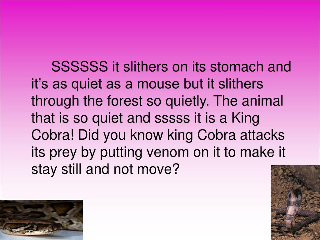 SSSSSS it slithers on its stomach and it's as quiet as a mouse but it slithers through the forest so quietly. The animal that is so quiet and sssss it is a King Cobra! Did you know king Cobra attacks its prey by putting venom on it to make it stay still and not move?