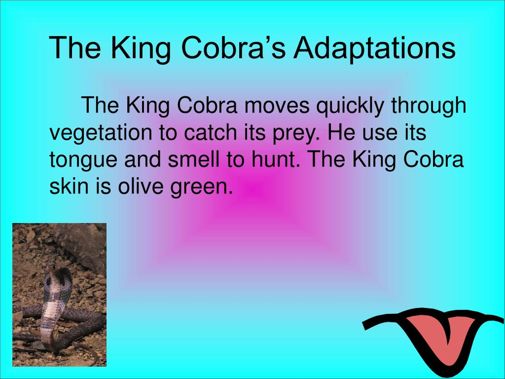 The King Cobra's Adaptations