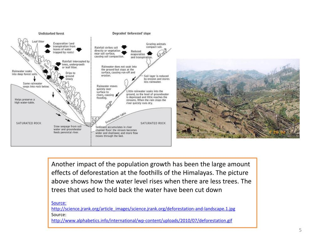 Another impact of the population growth has been the large amount effects of deforestation at the foothills of the Himalayas. The picture above shows how the water level rises when there are less trees. The trees that used to hold back the water have been cut down