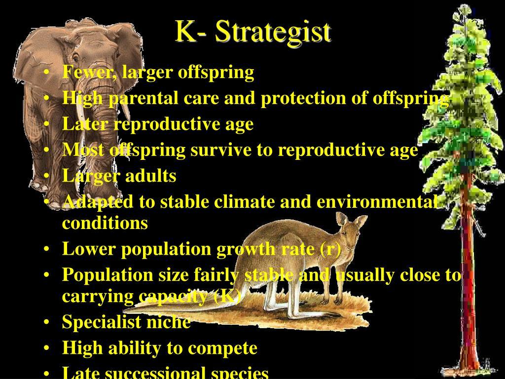 K- Strategist
