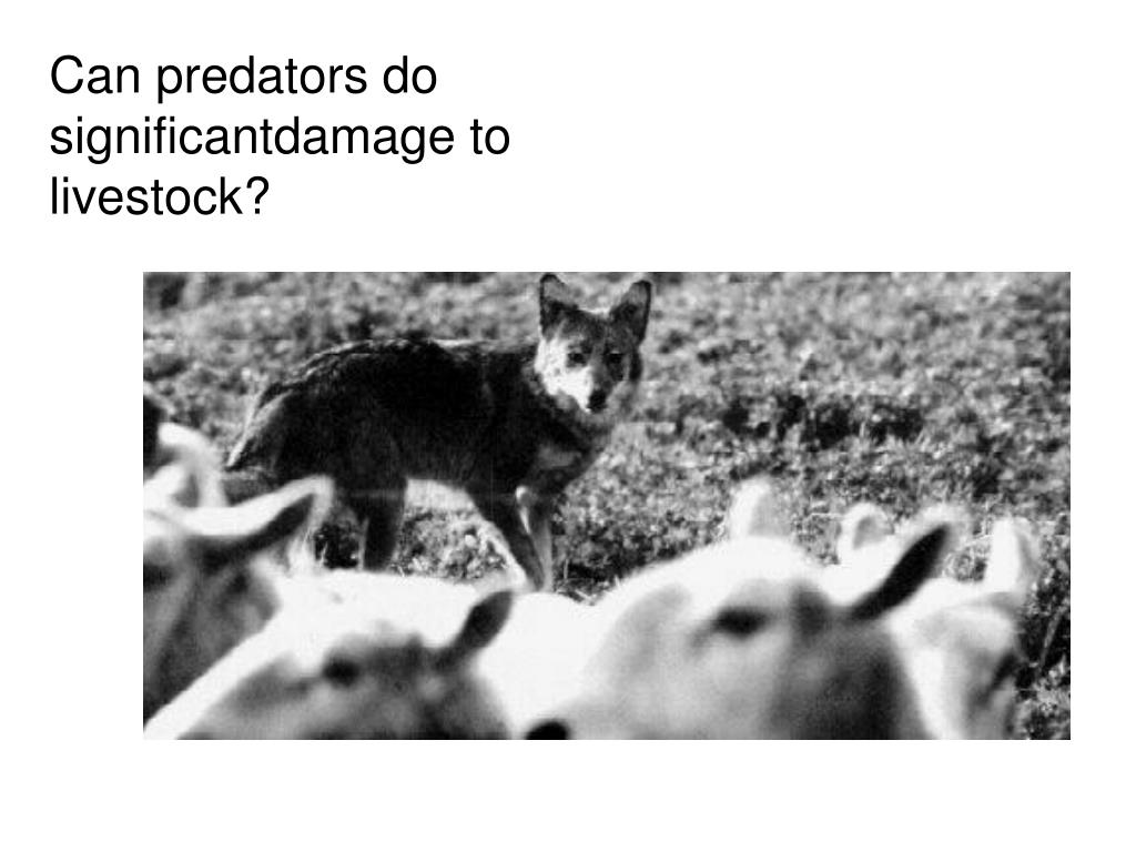 Can predators do significantdamage to livestock?