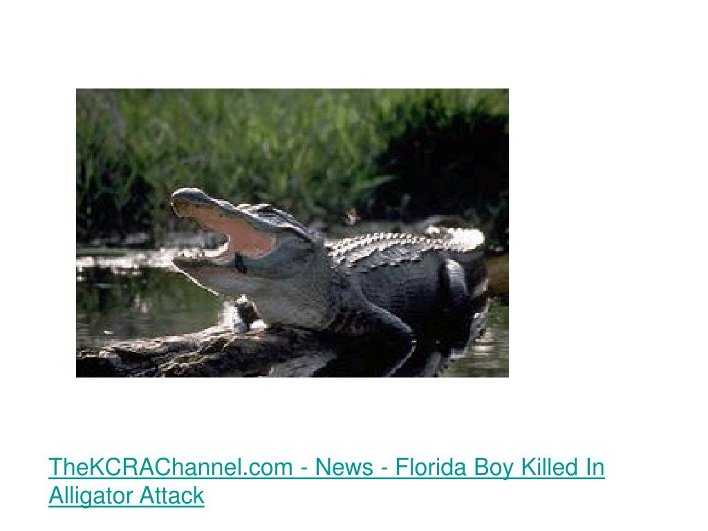 TheKCRAChannel.com - News - Florida Boy Killed In Alligator Attack
