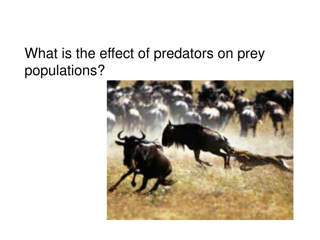 What is the effect of predators on prey populations?