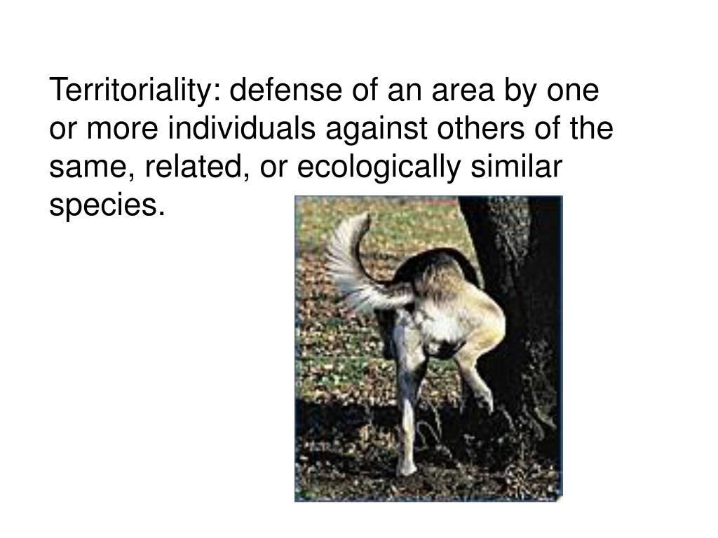 Territoriality: defense of an area by one or more individuals against others of the same, related, or ecologically similar species.