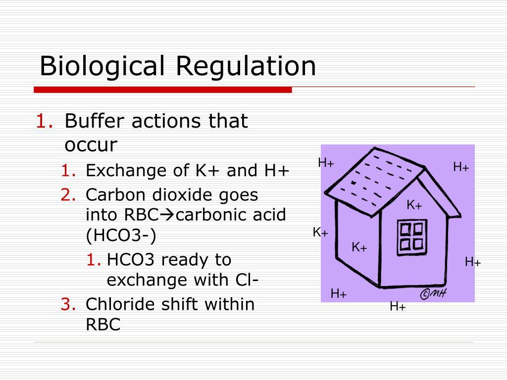 Biological Regulation