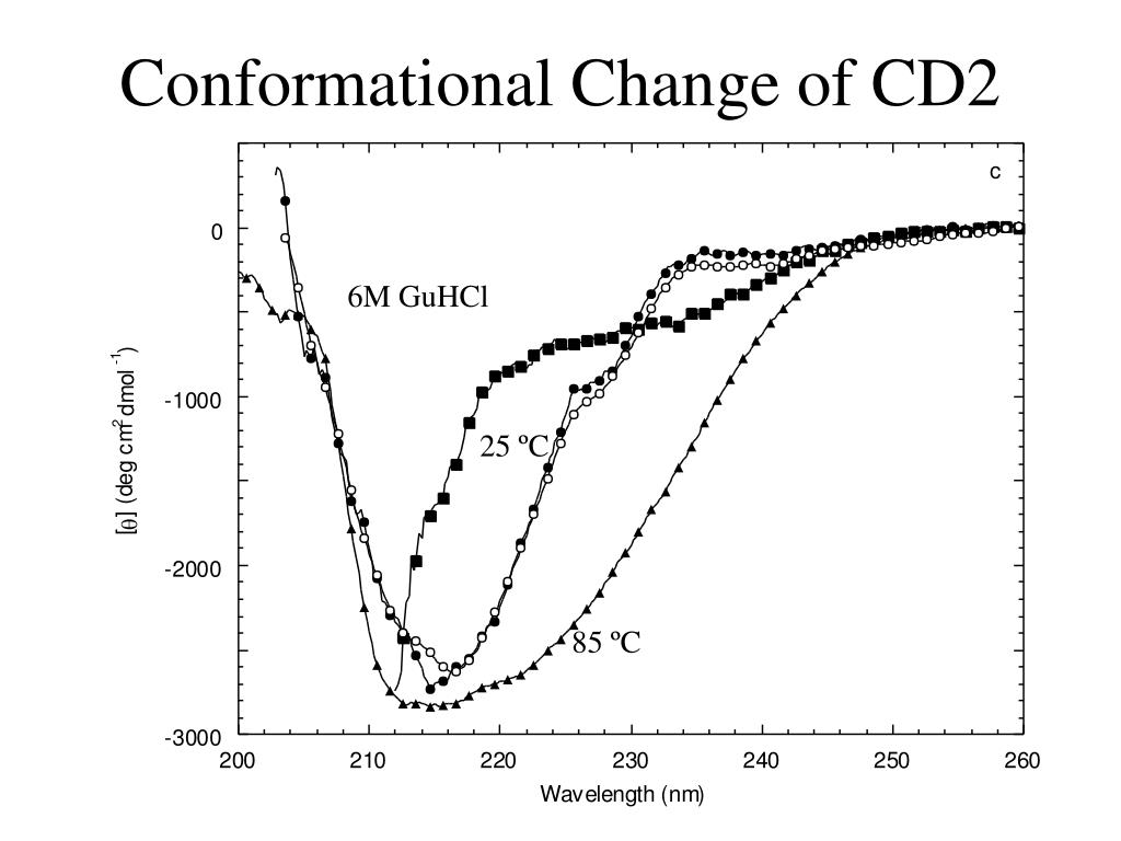 Conformational Change of CD2