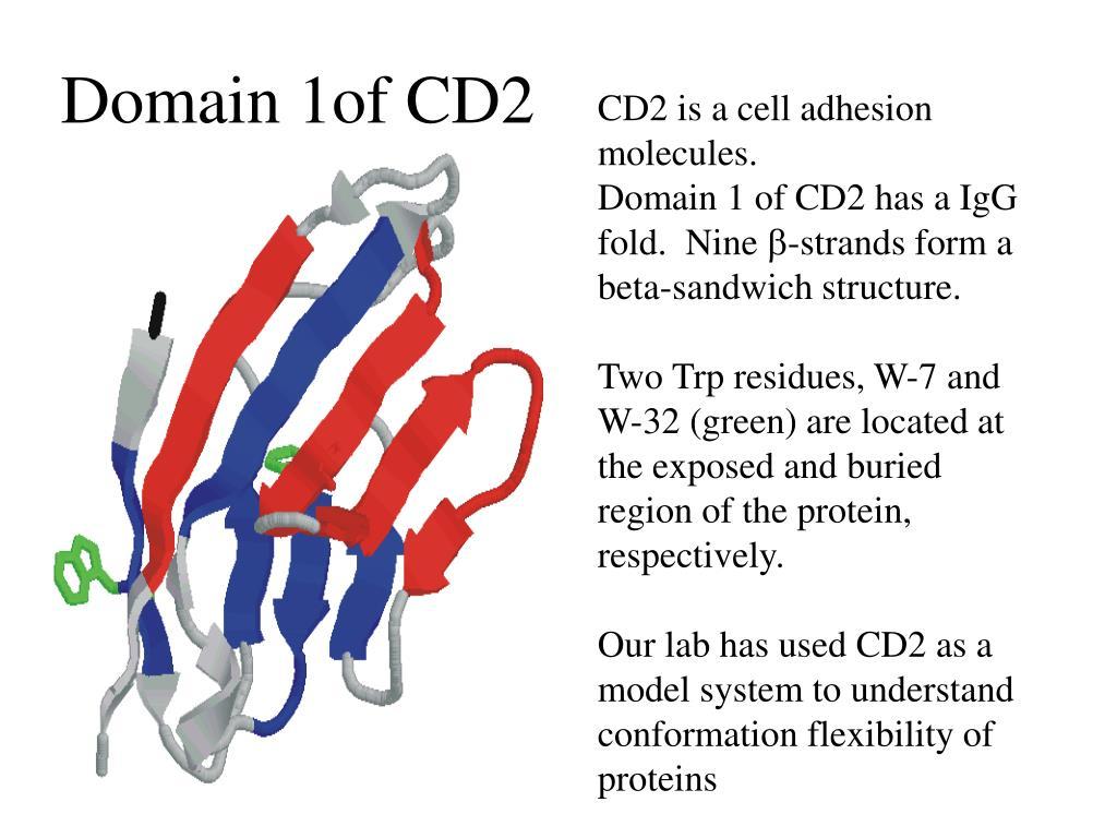 Domain 1of CD2