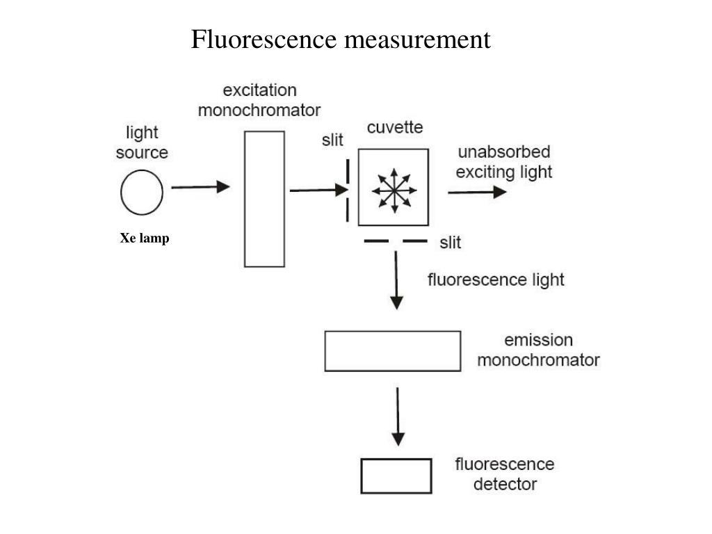 Fluorescence measurement