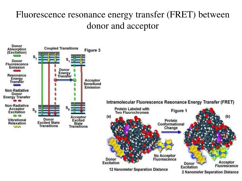 Fluorescence resonance energy transfer (FRET) between donor and acceptor