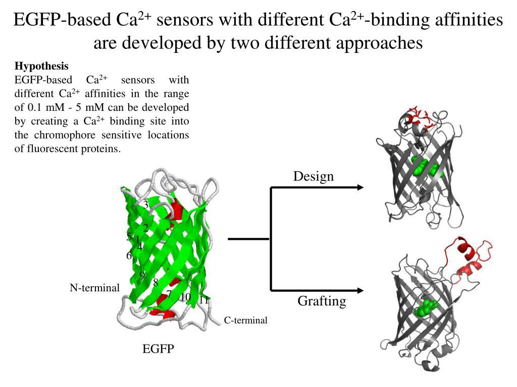 EGFP-based Ca