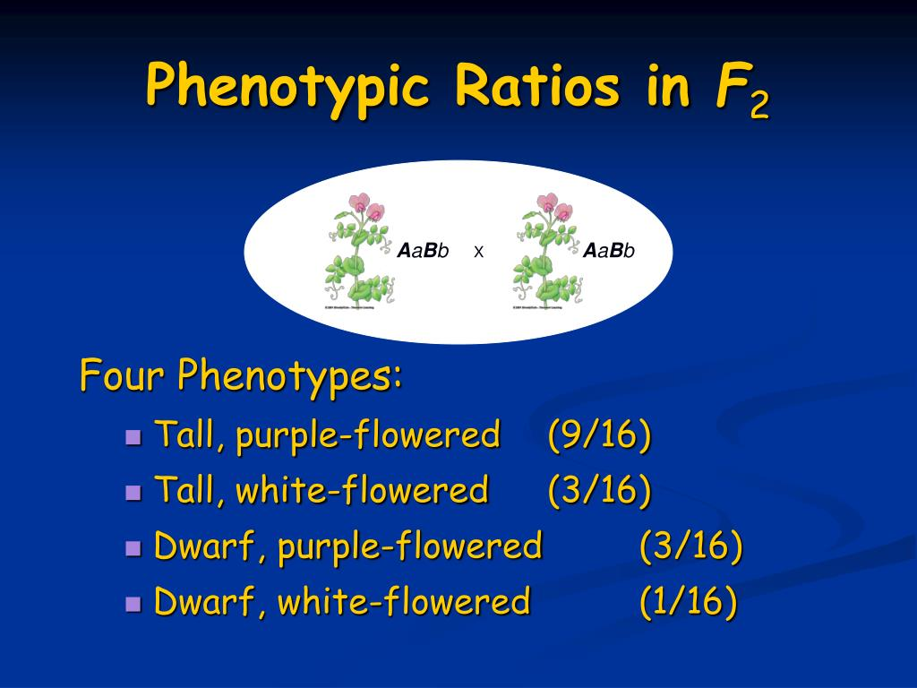 Phenotypic Ratios in