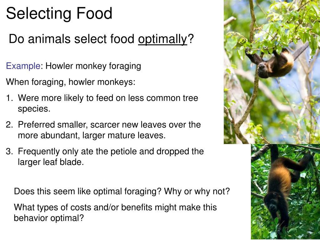 Selecting Food