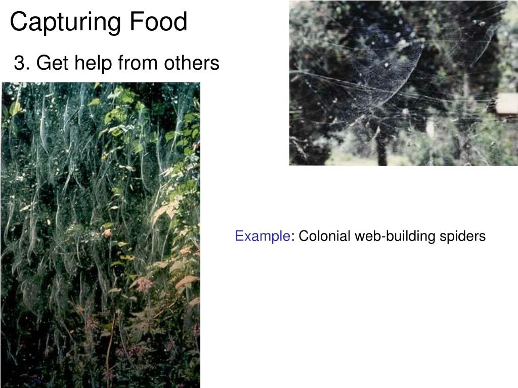 Capturing Food