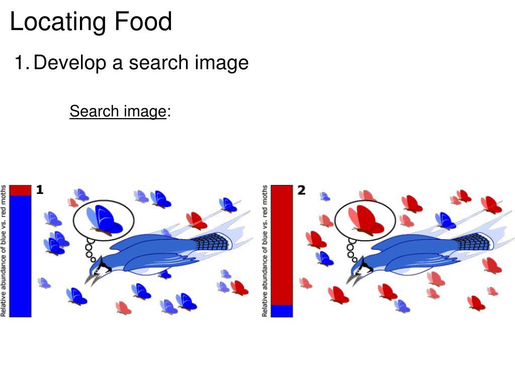 Locating Food
