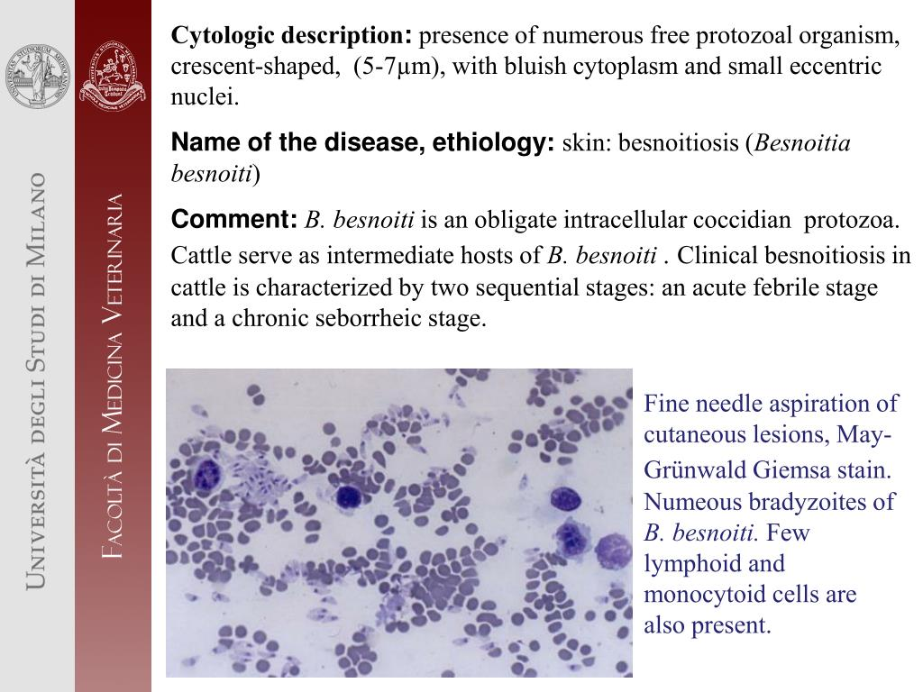 Cytologic description