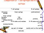 comparison of t cell epitope and b cell epitope